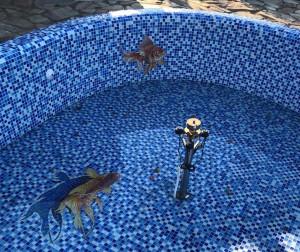 Рыбка с тенью в Бассейне.