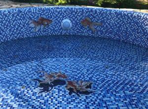 Мозаичные рыбки.